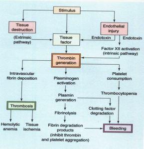 Pathophys of DIC. Source: Lippincotts